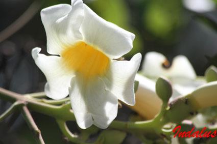 (Fotografia  batida na Rod. MS 352, entrada da RPPN Quinta do Sol)